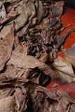 Tytoni liście dla cygar Zdjęcia Royalty Free