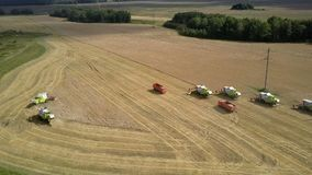 Aerial view green harvesters gather wheat throwing straw. Tyumen/Russia - August 31 2018: Inspiring aerial view green and white harvesters gather wheat throwing stock footage