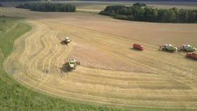 Aerial view green harvesters gather wheat near trucks. Tyumen/Russia - August 31 2018: Inspiring aerial view modern green and white harvesters gather wheat near stock footage