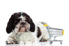 Tzu Shih σκυλιών με το καροτσάκι αγορών που απομονώνεται στο άσπρο κατοικίδιο ζώο υποβάθρου Στοκ εικόνα με δικαίωμα ελεύθερης χρήσης