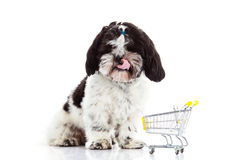 Tzu Shih σκυλιών με το καροτσάκι αγορών που απομονώνεται στο άσπρο σκυλί υποβάθρου Στοκ Εικόνες