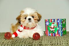 tzu shih щенка рождества Стоковая Фотография RF