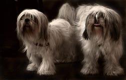 Tzupaar van Shi Royalty-vrije Stock Fotografie