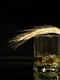 Uísque e trigo Foto de Stock