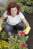 ułożenie ogrodniczka smilling kobiety jej róże zdjęcia stock