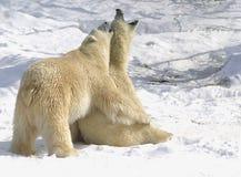 uścisk niedźwiedzia Fotografia Royalty Free