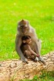 uścisku miłości natura s Fotografia Royalty Free