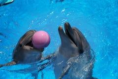 uśmiech delfina W basenie delfinu pływanie Zdjęcie Royalty Free