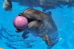 uśmiech delfina W basenie delfinu pływanie Obrazy Royalty Free
