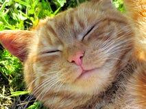 uśmiecha się kota zdjęcie royalty free