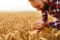 Uśmiechnięci mężczyzna mienia ucho banatka na tle pszeniczny pole Szczęśliwy agronoma rolnik dba o jego uprawie dla Zdjęcie Royalty Free