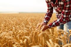 Uśmiechnięci mężczyzna mienia ucho banatka na tle pszeniczny pole Szczęśliwy agronoma rolnik dba o jego uprawie dla Fotografia Stock