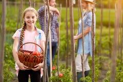 Uśmiechnięta dziewczyna z wygrzewający się pełno pomidory na gospodarstwie rolnym zdjęcie royalty free