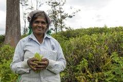 Uśmiechnięta kobieta pracuje na herbacianej plantaci w Sri Lanka Obraz Royalty Free