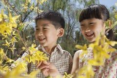 Uśmiechnięta młoda chłopiec i dziewczyna patrzeje kolorów żółtych okwitnięcia na drzewie w parku w wiośnie Obraz Stock