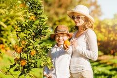 Uśmiechnięta szczęśliwa matka i syn zbiera pomarańcze zdjęcie stock