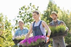 Uśmiechnięte ogrodniczki niesie skrzynki z kwiatów garnkami przy rośliny pepinierą Zdjęcia Stock