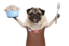 Uśmiechniętego mopsa grilla psi jest ubranym rzemienny fartuch, trzyma up błękitnego karmowego puchar Zdjęcie Stock