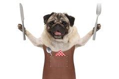 Uśmiechniętego mopsa grilla psi jest ubranym rzemienny fartuch, trzyma up cutlery dla jeść posiłek fotografia stock