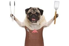 Uśmiechniętego mopsa grilla psi jest ubranym rzemienny fartuch, trzymający mięsnego tong i szpachelkę Zdjęcie Royalty Free