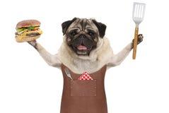 Uśmiechniętego mopsa grilla psi jest ubranym rzemienny fartuch, trzymający up hamburger i szpachelkę Zdjęcie Stock