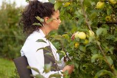 Uśmiechnięty agronom z notatnik pozycją w jabłczanym sadzie Zdjęcia Royalty Free