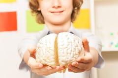 Uśmiechnięty chłopiec mienia cerebrum model przy jego ręki obraz royalty free
