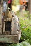 Uśmiechnięty dyniowy Helloween Zdjęcie Stock