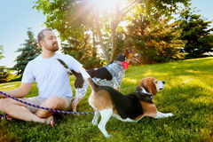 Uśmiechnięty mężczyzna utrzymuje psy na smyczu w lecie Obrazy Royalty Free