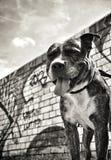 Uśmiechnięty pies zdjęcie stock