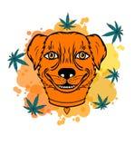 Uśmiechnięty pies z liściem fotografia stock