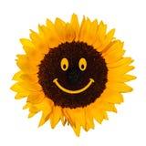 Uśmiechnięty słonecznik Zdjęcie Stock