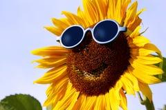 Uśmiechnięty słonecznik z okularami przeciwsłonecznymi Obraz Royalty Free