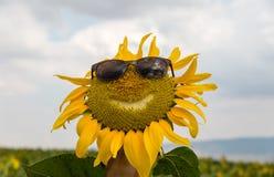 Uśmiechnięty twarz słonecznik z okularami przeciwsłonecznymi w słonecznika polu obraz stock