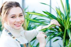 Uśmiechnięty uroczy kobiety ogrodniczki działanie i brać opieka ficus Fotografia Royalty Free