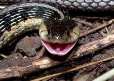 uśmiechnięty wąż Fotografia Royalty Free