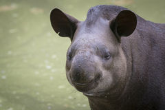 Uśmiechnięty zwierzę Zdjęcie Royalty Free