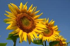 uśmiechu kolor żółty Obraz Stock