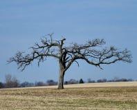 Uśpiony drzewo zdjęcia royalty free