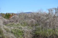 Uśpiony Kudzu winogradu krajobraz obraz royalty free