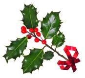 uświęconego ostrokrzewu odosobniony czerwony tasiemkowy biel Fotografia Stock