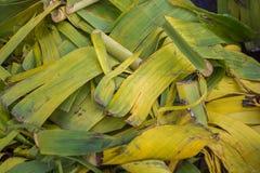 Używać bananowy liść w śmieci Zdjęcie Royalty Free