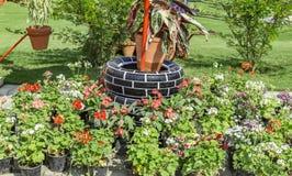 Używać opony w ogródzie obrazy stock