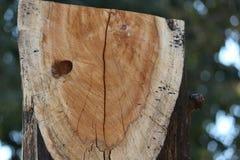 U形状木视图在庭院里 免版税库存图片