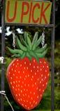 U采撷草莓在6月签到NH 库存照片
