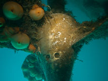 U boat wreck diving in Ireland. Diver off the coast of cork, Ireland royalty free stock photos