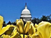 U Capitoolmening door tulpen royalty-vrije stock foto's