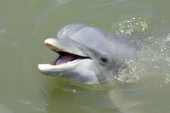 uśmiech delfina Zdjęcia Royalty Free