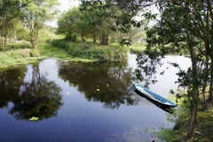 U Minh Thuong las państwowy Fotografia Stock