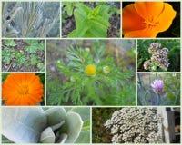 U occidentale S Collage delle erbe Immagine Stock